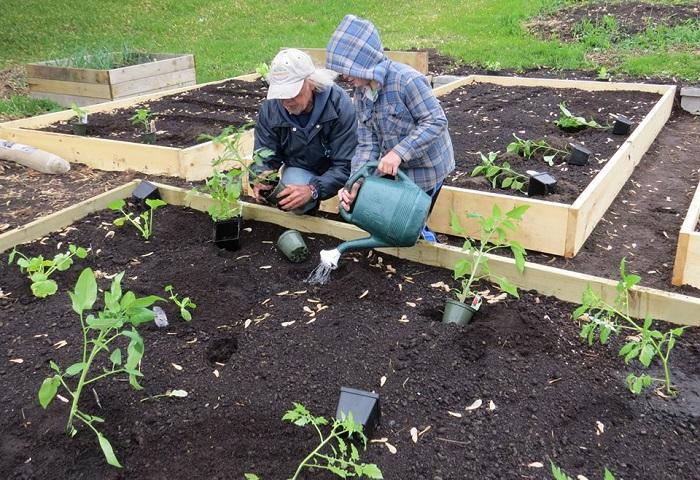 Plantation-jardins-potagers-communautaires-Beauharnois-photo-Facebook-publiee-par-INFOSuroit_com