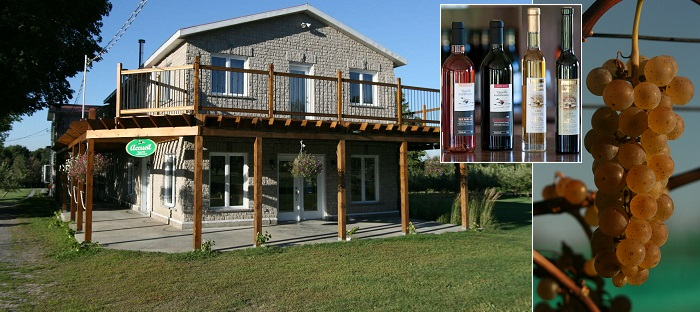 Vignoble_du_Marathonien accueil raisins et vins Photos courtoisie