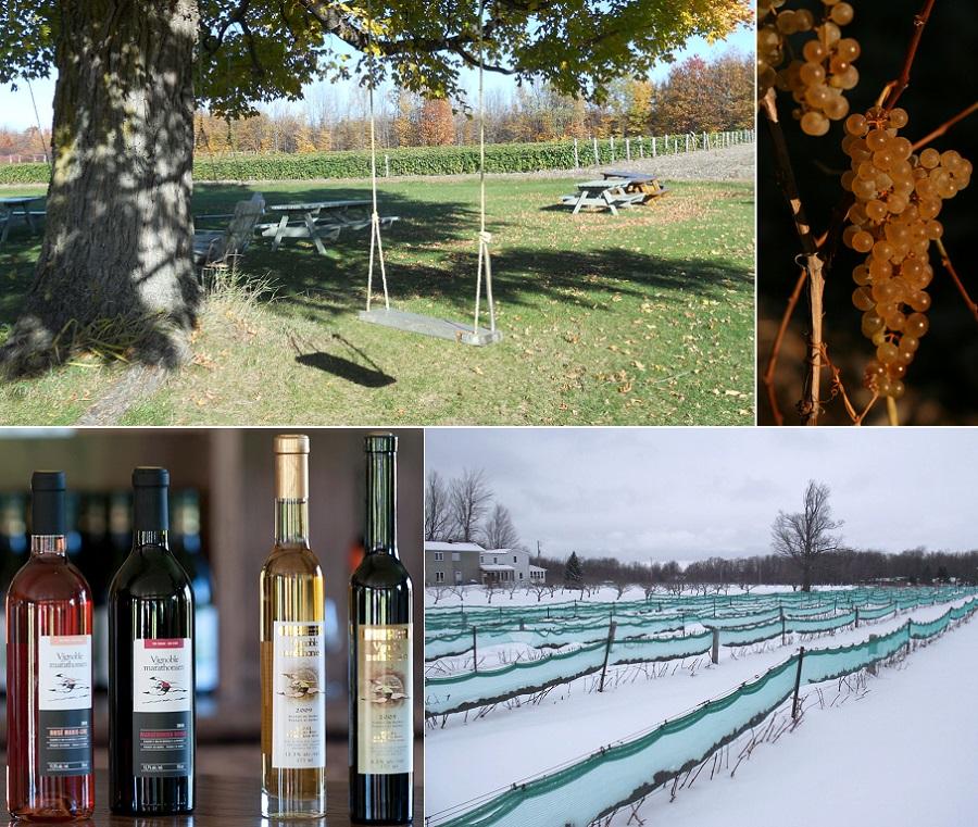 Vignoble_du_Marathonien vignes tables de pique-nique Raisins Vins et vignes hiver Photos courtoisie
