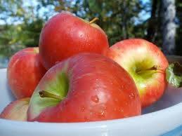 Pommes-autocueillette-Vergers-Frier-photo-courtoisie-publiee-par-INFOSuroit_com