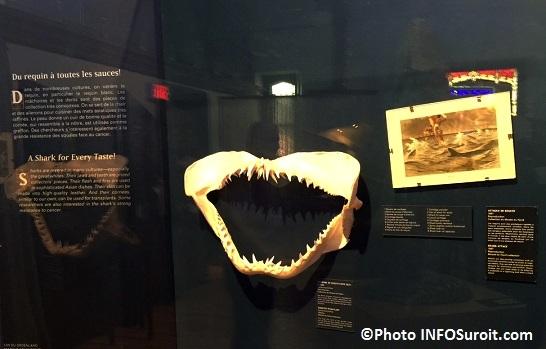 Requin exposition Fantastiques monstres marins au MUSO Photo INFOSuroit_com