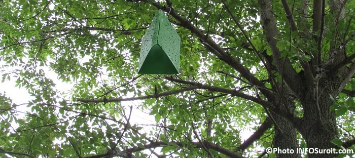 arbre avec piege a insectes pour Agrile du frene Photo INFOSuroit_com