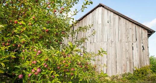 gite Au_petit_ruisseau pommiers grange cueillette Photo courtoisie site Web aupetitruisseau_com