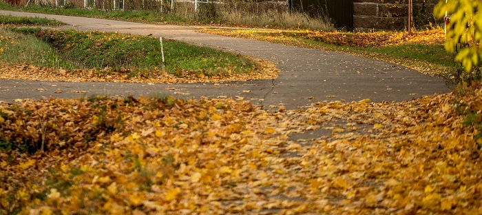 automne-pelouse-feuilles-mortes-terrain-Photo-Pixabay-Via-INFOSuroit