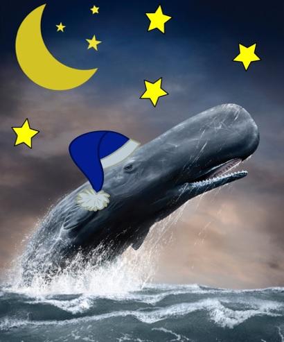 une nuit au MUSO baleine etoiles Visuel courtoisie MUSO