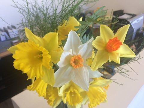 fleurs jonquilles vente au profit de la SCC lutte contre cancer photo courtoisie