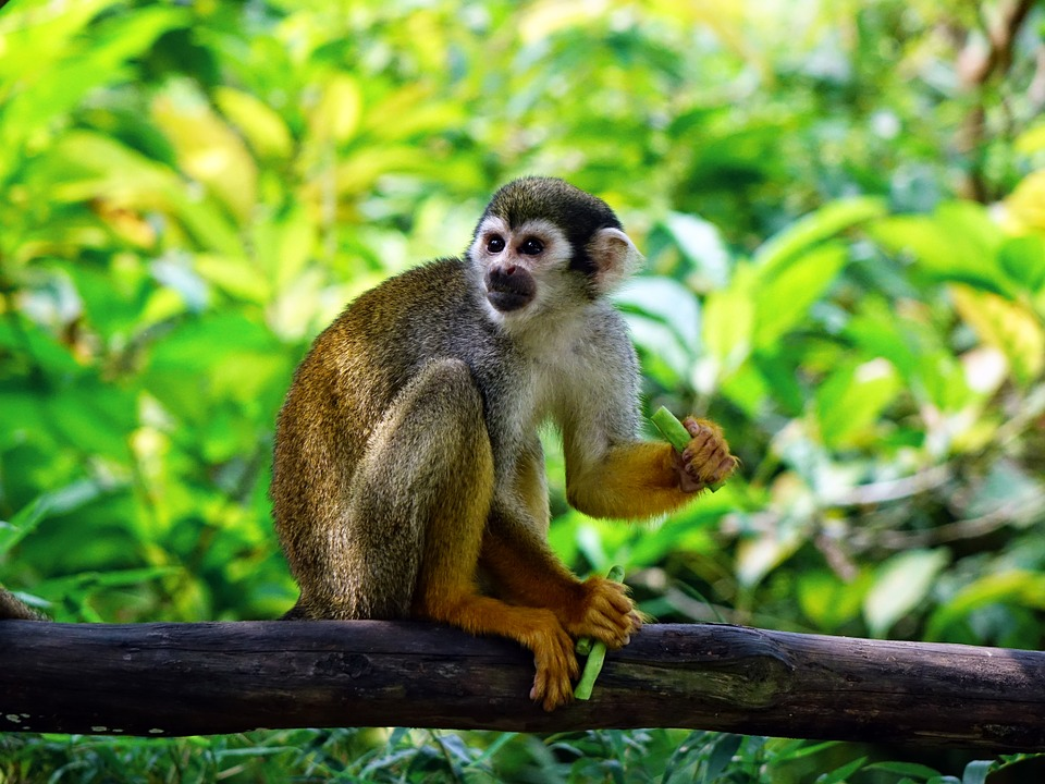 singe-photo-pixabay-publiee-par-INFOSuroit-com