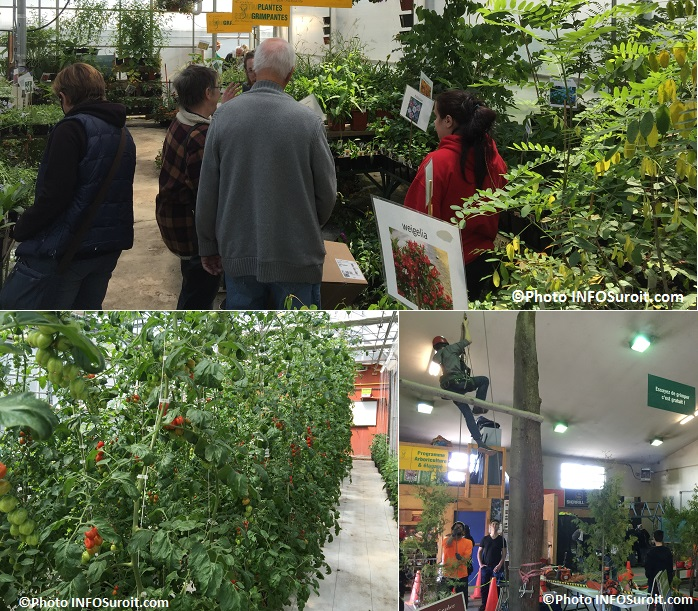 Moissons en Fleurs 2016 visiteurs plantes tomates grimpantes et grimpeur Photos INFOSuroit