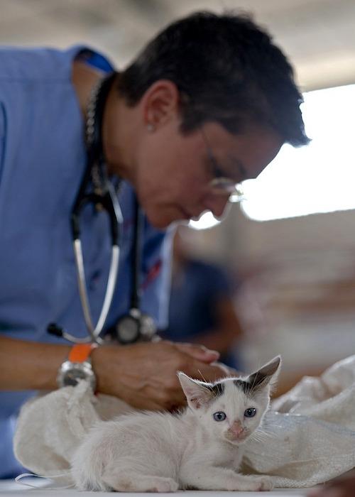 chat et veterinaire image Pixabay via INFOSuroit_com