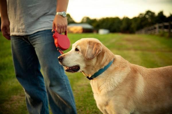 chien en laisse Photo courtoisie Ville Valleyfield