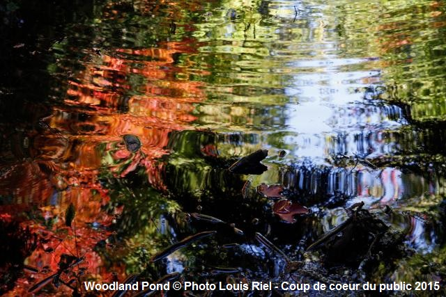 concours Photo MRC HSL Woodland_Pond Copyright Photo Louis Riel Coup de coeur public 2015