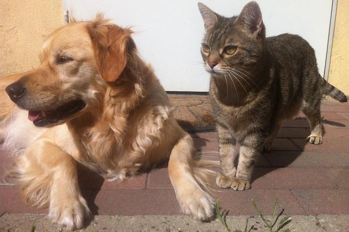 chien-et-chat-animaux-de-compagnie-photo-pixabay-via-infosuroit
