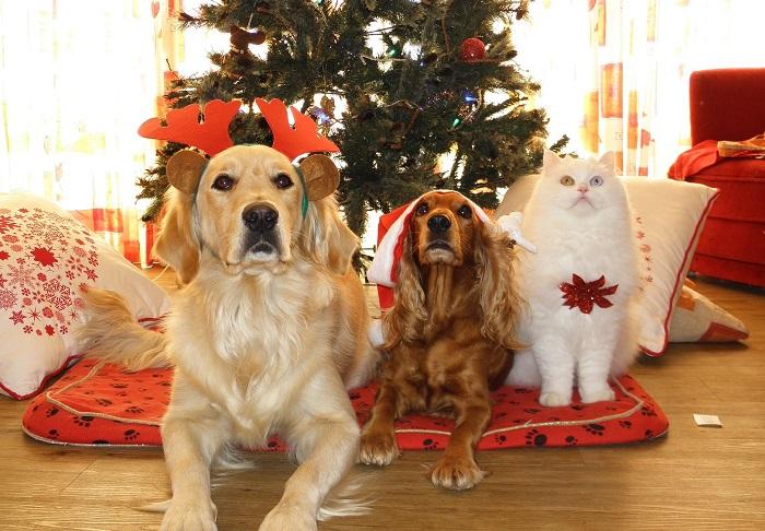 chiens-et-chat-sapin-noel-temps-des-fetes-photo-pixabay-via-infosuroit
