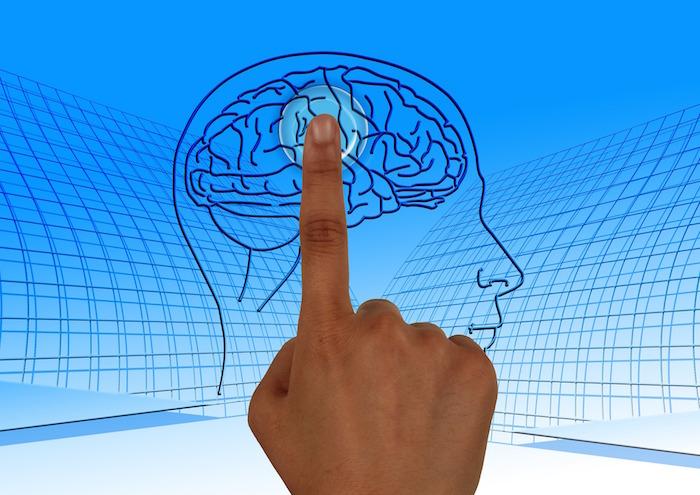 cerveau-intelligence-cours-formation-image-pixabay