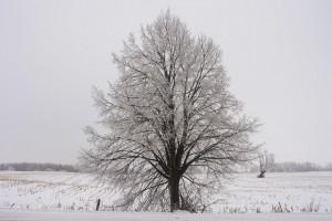 terre-agricole-hiver-arbre-agriculture-photo-kelseyannvere-via-pixabay