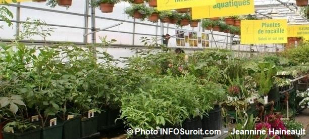 Moissons en fleurs plantes interieures serre Photo INFOSuroit_com-Jeannine_Haineault