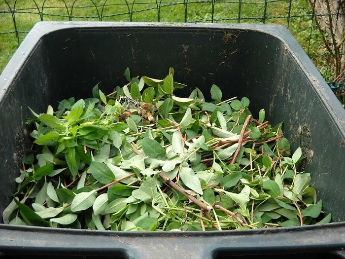 collecte residus verts recuperation porte-a-porte dechet poubelle Photo Dmoreaurh via Pixabay