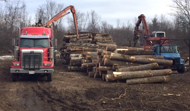 secteur agroforestier Coop Unifrontieres coupe bois photo courtoisie coop