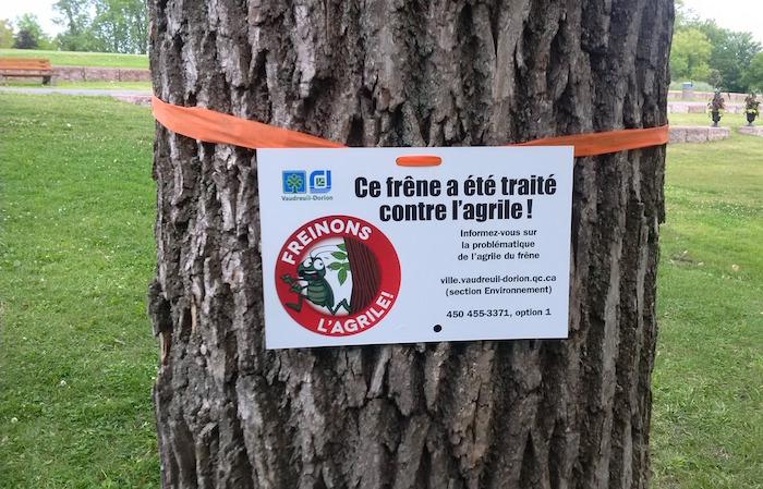 arbre frene affiche traitement contre agrile Photo courtoisie Ville Vaudreuil-Dorion