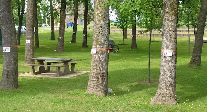 arbres frenes parc Valois Vaudreuil-Dorion traitement contre agrile Photo courtoisie