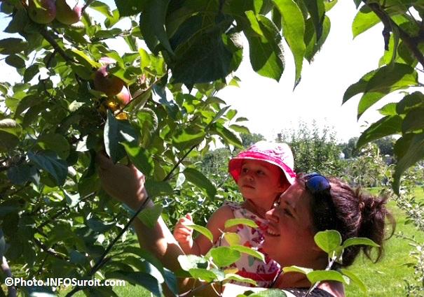 pommes-verger-cueillette-famille-Circuit-du-Paysan-Photo-INFOSuroit-Manon_Turbide