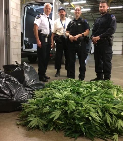 saisie cannabis policiers de Mercier Photo courtoisie Ville Mercier