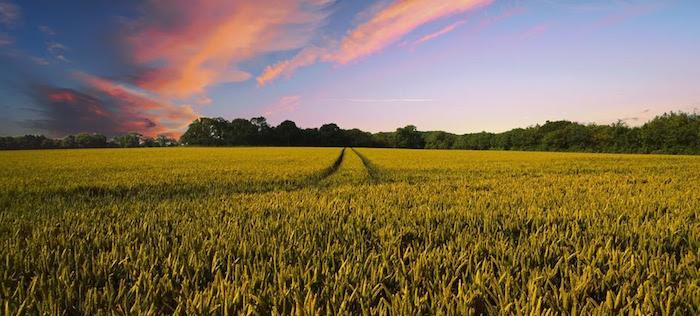 agriculture champ ciel coucher de soleil Image courtoisie RIMAS