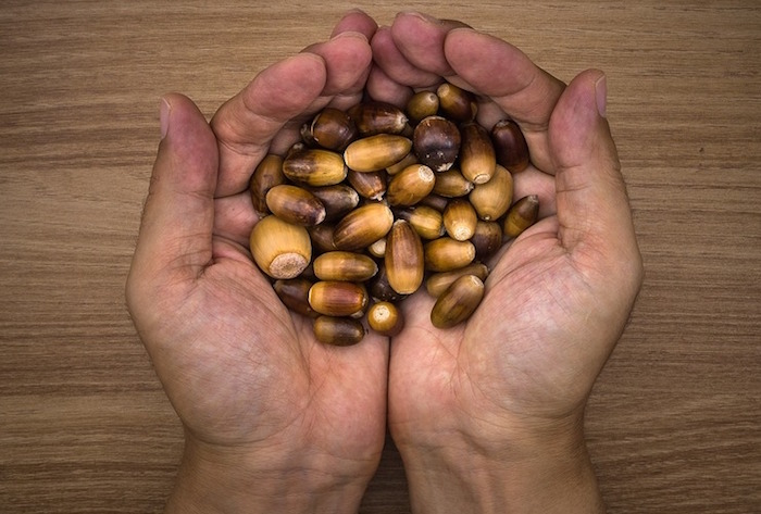 gland noix noisettes fruit Photo JeonSango Pixabay CC0