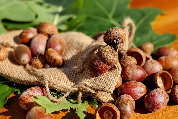 glands chene noix fruit Photo Couleur courtoisie Pixabay CC0