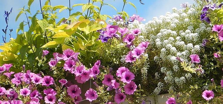 amenagement paysager fleurs printemps Photo Pixel1 via Pixabay CC0 et INFOSuroit