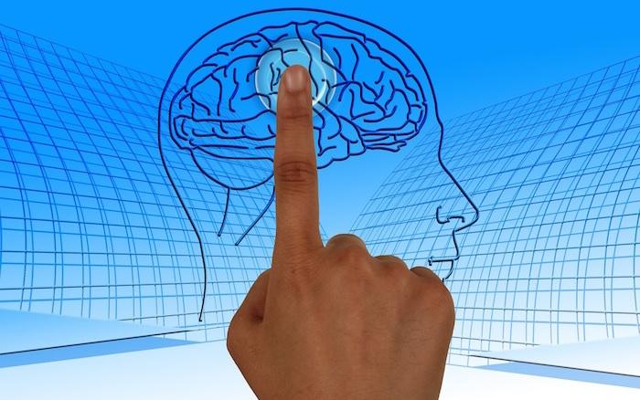 cerveau intelligence formation visuel Geralt via Pixabay CC0 et INFOSuroit