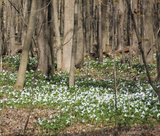 centre ecologique Fernand-Seguin floraison au printemps photo courtoisie SOS Fernand-Seguin