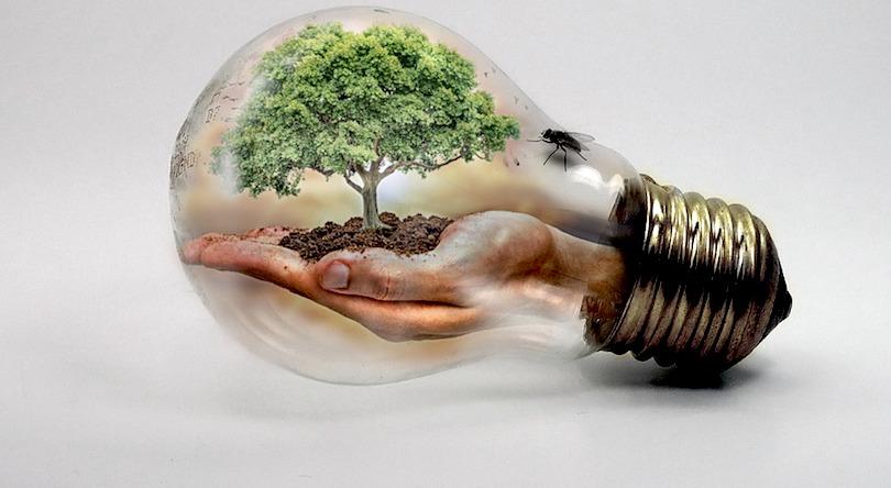 changements climatiques ampoule arbre vie bulle de verre photo Thommas68 via Pixabay CC0 et INFOSuroit
