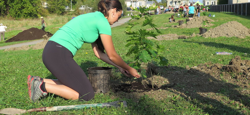 plantation a Valleyfield parc du Ruisseau 2017 avec citoyens Foret_Canada et CriVert photo courtoisie SdV