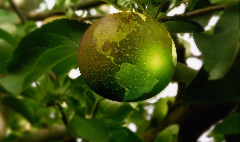 ecologie environnement arbre pomme planete visuel Geralt via Pixabay CC0 et INFOSuroit_com