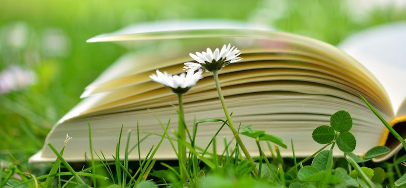 livre lecture saison estivale fleurs pelouse photo CongerDesign via Pixabay CC0 et INFOSuroit