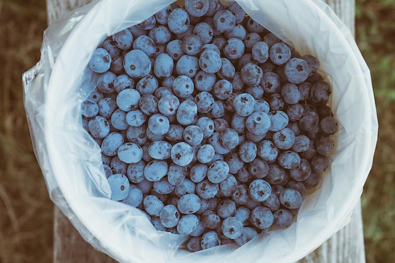 bleuets petits fruits panier antioxydant photo Pexels via Pixabay CC0 et INFOSuroit