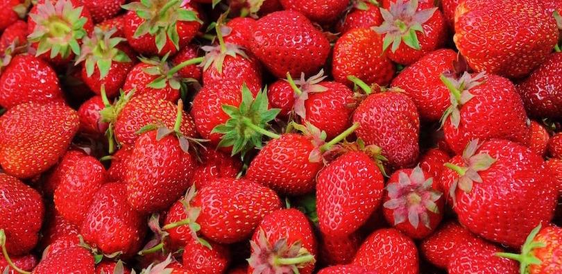 fraises petits fruits Photo GoranMX via Pixabay CC0 et INFOSuroit