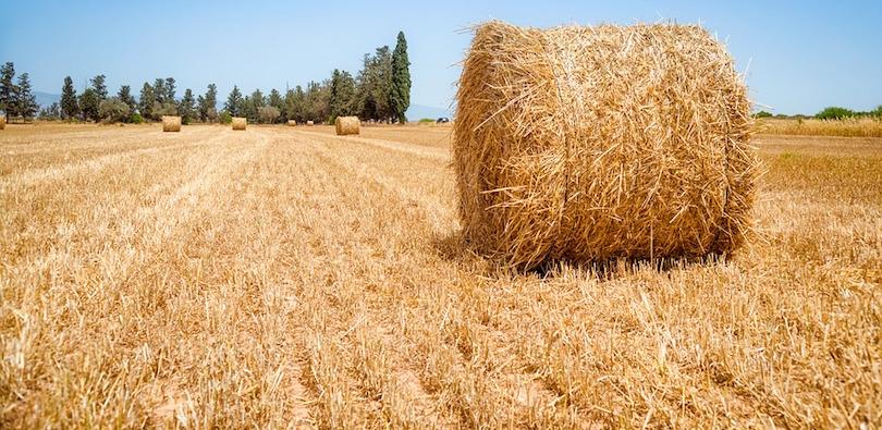 terre agricole ble foin champ photo www_slon_pics via Pixabay CC0 et INFOSuroit
