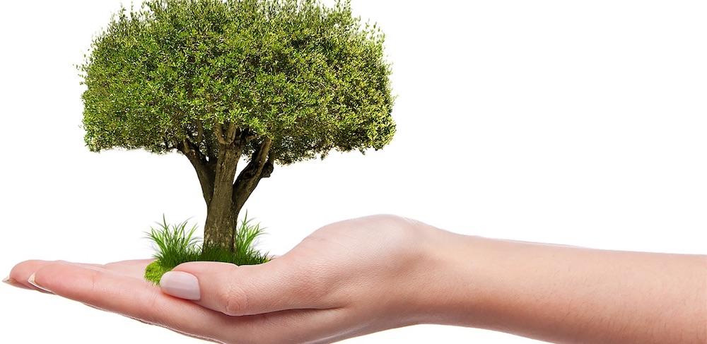 plantation arbre main photo montage Umutavci via Pixabay CC0 et INFOSuroit