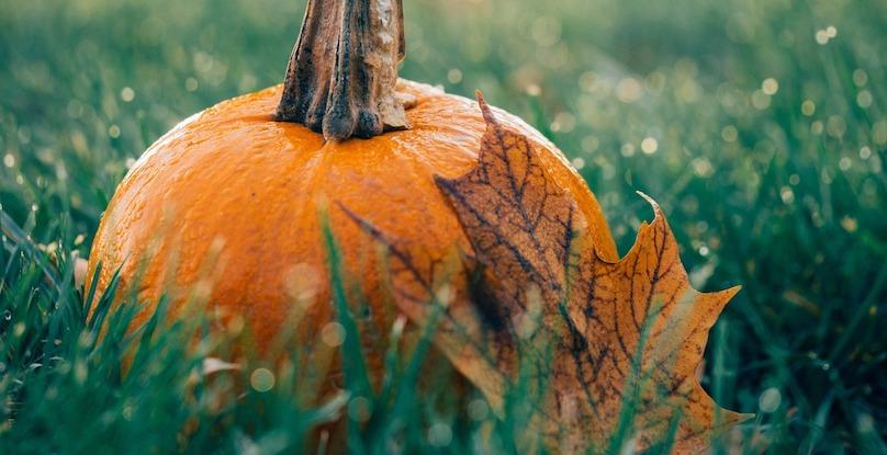citrouilles feuille automne photo Free-Photos via Pixabay CC0 et INFOSuroit