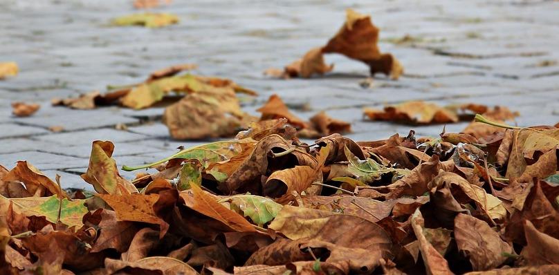 automne feuilles mortes entree photo Pixel2013 via Pixabay CC0 et INFOSuroit