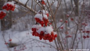 hiver-arbres-fruitiers-couleur-neige-Copyright-photo-Jeannine_Haineault