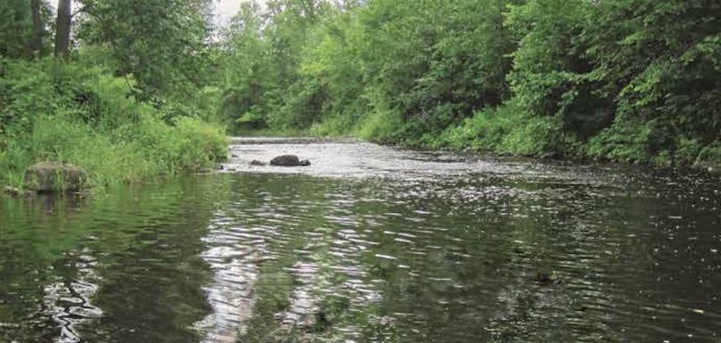 riviere cours_d_eau nature faune photo courtoisie organisme Ambioterra