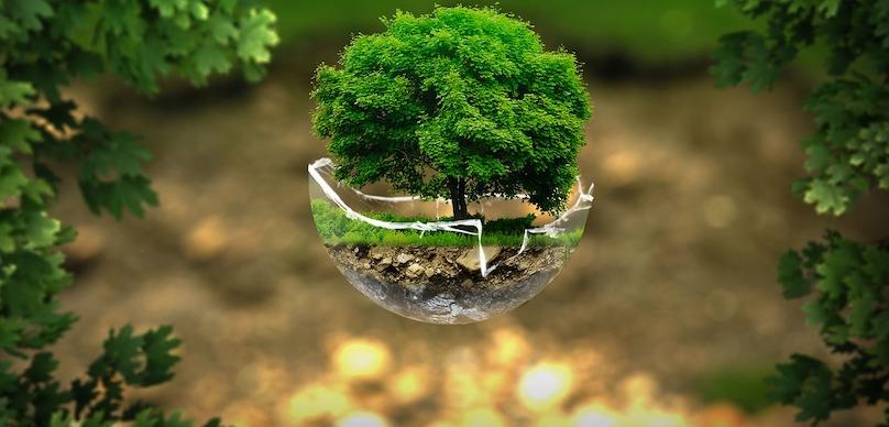 environnement protection planete arbre nature photo Thommas68 via Pixabay CC0 et INFOSuroit_com