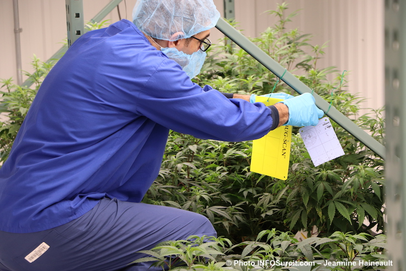 plan de cannabis usine TGOD a Valleyfield 26fev2019 photo INFOSuroit-Jeannine_Haineault