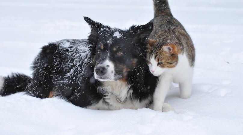 chien et chat hiver neige photo Jupri via Pixabay CC0 et INFOSuroit
