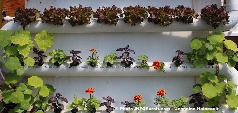 expo vente Moisson_en_fleurs CFP_des_moissons photo JH INFOSuroit