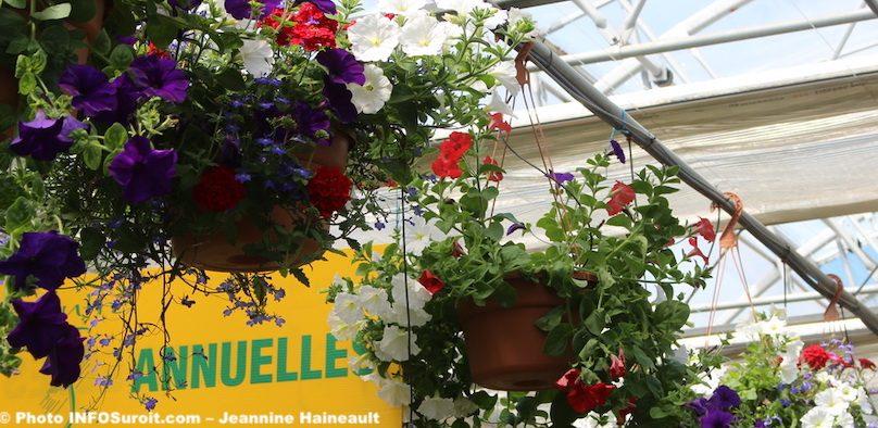 expo-vente Moisson_en_fleurs annuelles photo JH INFOSuroit
