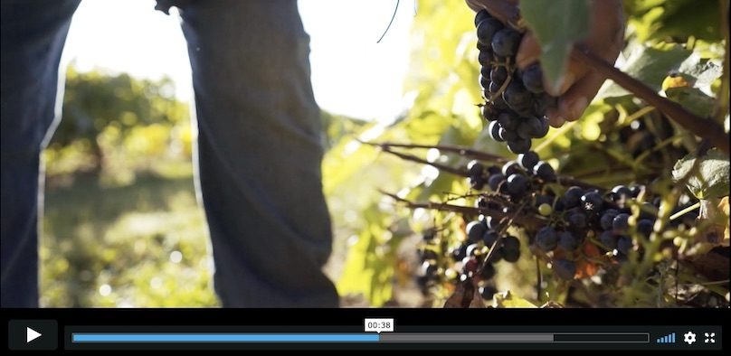extrait video Vignoble J_O_Montpetit via Vimeo Creation_Webson